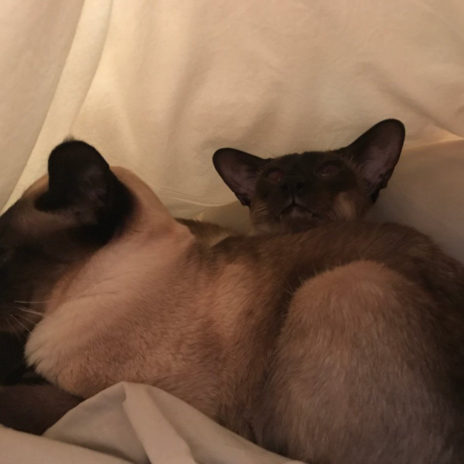 Sunday morning and the cats fancy climbing into bed